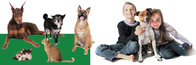 Animal Shelter-main