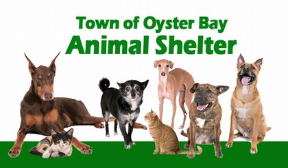 Animal Shelter – Town of Oyster Bay