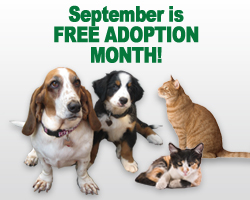 FreeAdoptionMonth