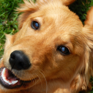 Saladino Announces New Law to Protect Dogs from Harm and Neglect