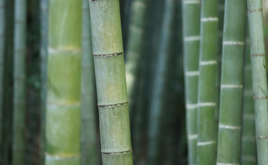 Saladino, Town Board Pass Law to Restrict Invasive Bamboo